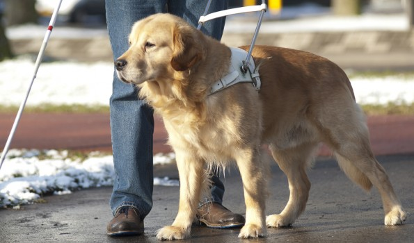 Pies przewodniik