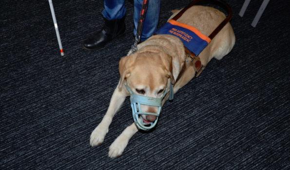 Pierwszy standard dot. psów przewodników do konsultacji