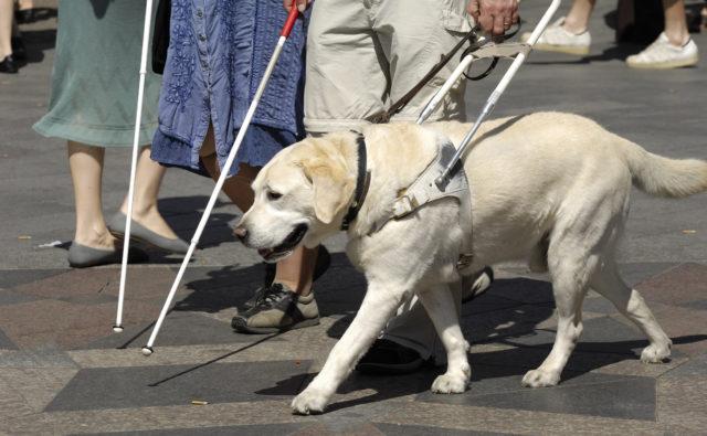 Idzie ulicą kilka osób niewidomych, jedna z psem przewodnikiem