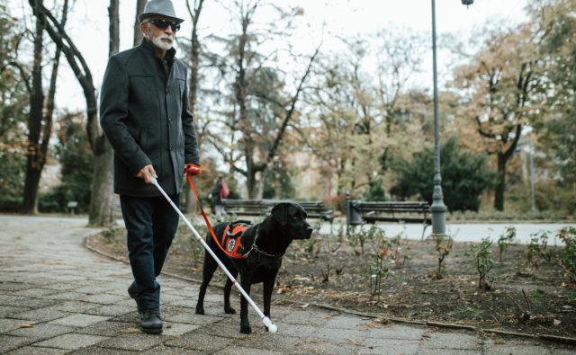 niewidomy z laską i psem przewodnikiem. idą po parku