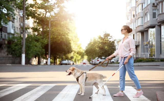 Młoda kobieta z psem przewodnikiem przechodzi przez przejście dla pieszych