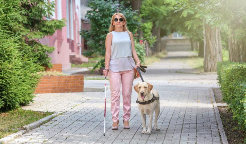 Kobieta idzie z psem przewodnikiem