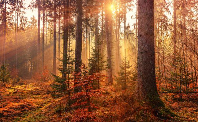 Las i promienie słoneczne zza drzew