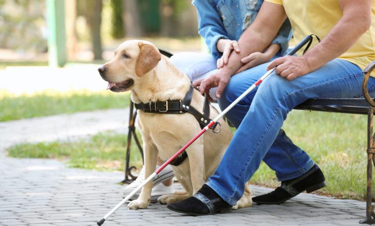 Osoba niewidoma siedzi na ławce z psem przewodnikiem